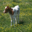 heifer2-3.jpg