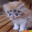 funny-pictures-alien-kitten-GXm.jpg
